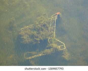 The iron trolley on wheels was thrown out as garbage in water and it was covered with algae.