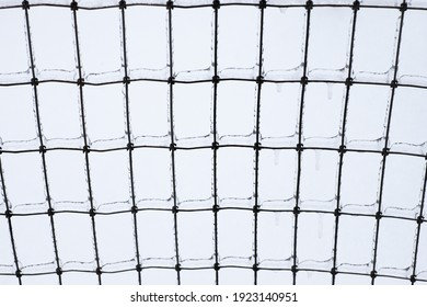 iron wire fence covered by ice
