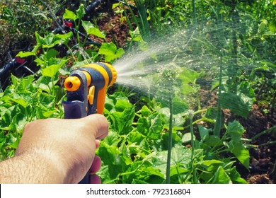 Irragation spray in hand on the field