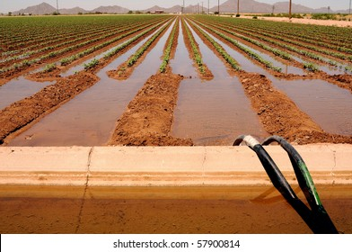 Irrigated cotton field in the valley of the sun Arizona