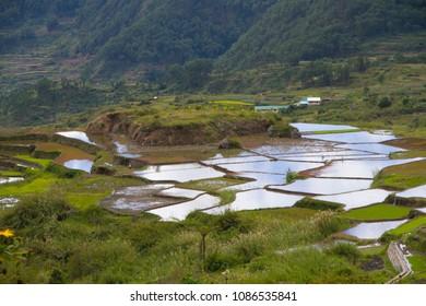 Irrigated ricefields in Sagada, Philippines