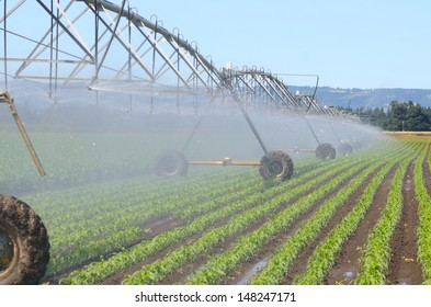 Irrigating newly planted corn using a center pivot system in the Willamette Valley of Oregon