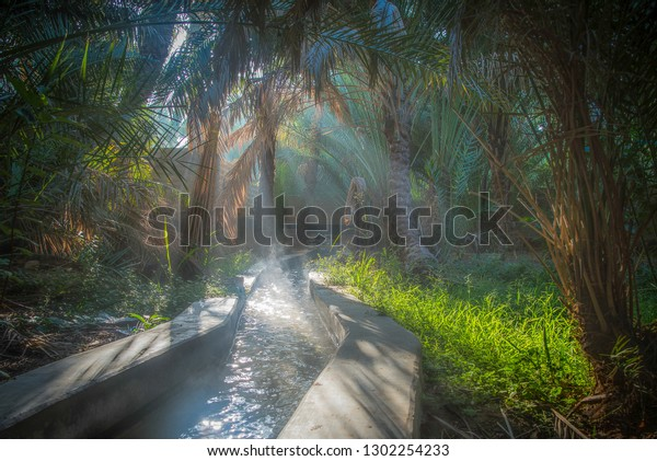 Irrigation channel in the Al Ain oasis, one misty morning