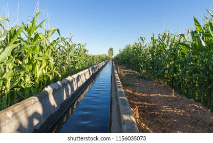 Irrigation channel between fields with corn crops and trees in the background