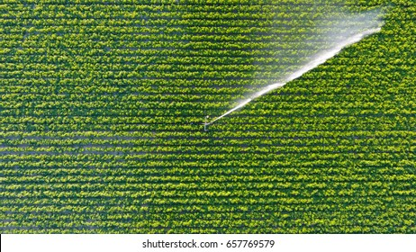 Irrigation fields