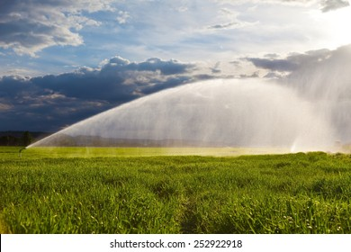 irrigation of a green wheat field against a dramatic sky at sunset