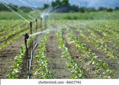 Irrigation on Agricultural land