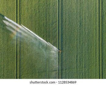 Irrigation of plants and vegetables