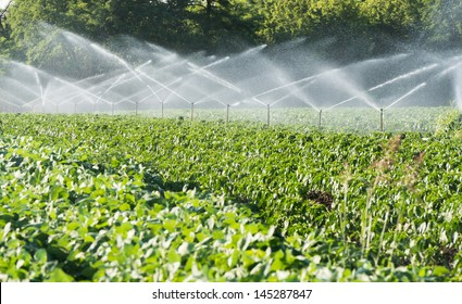 Irrigation system on green field