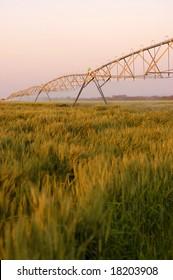 An irrigation system running over a wheat field