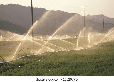 Irrigation system in the San Joaquin Valley, CA