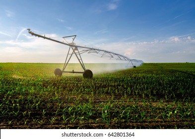 Irrigation system watering corn field on sunny summer day.