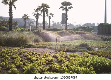 Irrigation system watering plants, flowers, seed in the city of Cassablanca - Morocco. Water splash from the sprinkle system.