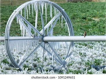 Irrigation: Water frozen to grass and irrigation system after a cold May night.