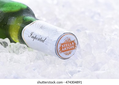 IRVINE, CA - AUGUST 26, 2016: A bottle of Stella Artois Beer closeup on Ice. Stella has been brewed in Leuven, Belgium, since 1926, and launched as a festive beer, named after the Christmas star.