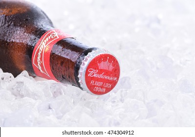 IRVINE, CA - AUGUST 26, 2016: Two bottles of Budweiser on a bed of ice. From Anheuser-Busch InBev, Budweiser is one of the top selling domestic beers in the United States.