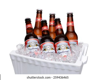 IRVINE, CA - JULY 14, 2014: Budweiser Bottles in Styrofoam Ice Chest. From Anheuser-Busch InBev, Budweiser is one of the top selling domestic beers in the United States.