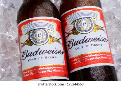 IRVINE, CA - MAY 27, 2014: Two bottles of Budweiser on a bed of ice. From Anheuser-Busch InBev, Budweiser is one of the top selling domestic beers in the United States.