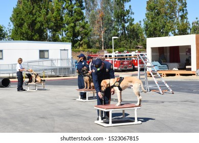 IRVINE, CALIFORNIA - 5 OCT 2019: Handlers tend to their Search and Rescue dogs during the Orange County Fire Authority open house.