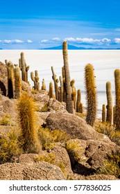 Isa Incahuasi or Cactus Island in Salar De Uyuni, Bolivia