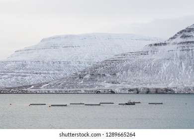 ISAFJORDUR, ICELAND - JANUARY 19, 2019: An aquaculture farm outside the town of Isafjordur in the Icelandic westfjords. Salmon and trout farming is a growing industry in the area and is about to boom.