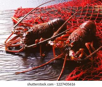 Ise-Ebi (Japanese spiny lobster)