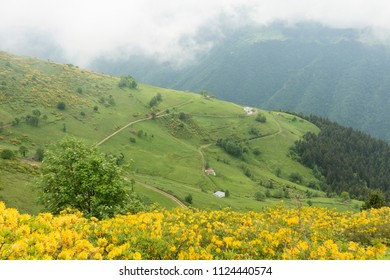 The Iskopil plateau of Macka province of Trabzon city of Turkey.Fog covers the hills in a foggy day.