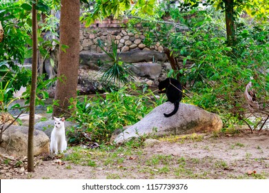 Isla Cuale in Cuale River Puerto Vallarta Mexico with two feral cats in jungle environment.