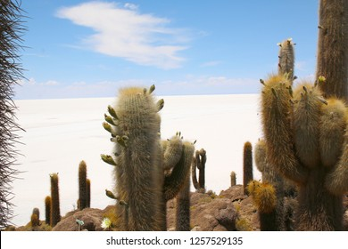 Isla de Pescadores, Salt lake Uyuni in Bolivia. Salar de Uyuni is the biggest salt lake of the world situated in Bolivia.