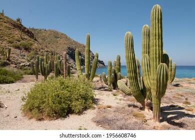 Isla Santa Catalina, Baja California Sur, Mexico