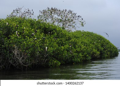 Island of the birds in the mangrove natural reserve of Puerto Pizarro in Tumbes-PERU