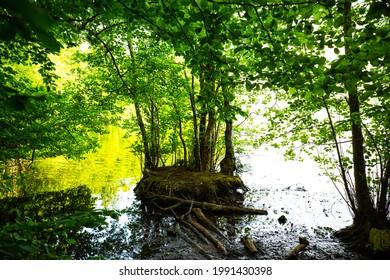 Island for breeding on Lake Wessling