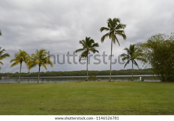 Island Coconout Bahia