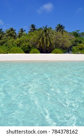 Island in the Maldives with palm trees and clear water