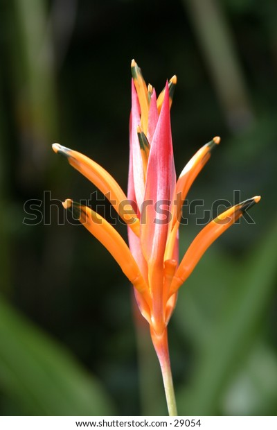 the island of maui in hawaii is known for its beautiful and vast array of diffrent flowers and plants.