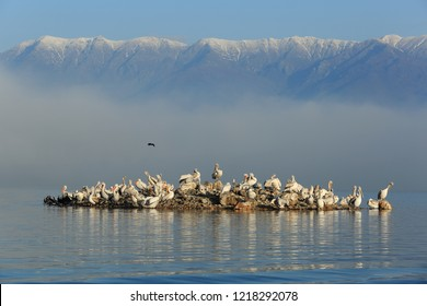 Island of pelicans