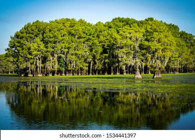 Island of trees with reflection at Caddo Lake near Uncertain, Texas