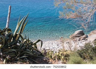 Isola d'Elba turquoise sea and mediterranean vegetation, Elba Island, italy.
