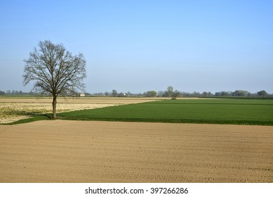 Isola Pescaroli (Cr),Italy, agricultural fields in the floodplain of the River Po