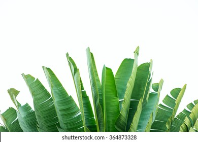 Isolate the banana leaves.