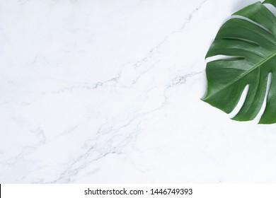 Isolate Dunkelgrüne Monstera große Blätter, philodendron tropische Blattpflanze, die in freier Wildbahn auf weißem, mabelbedecktem Hintergrund wachsen Konzept für flache Sommer-Grünblattstruktur Regenwald florale