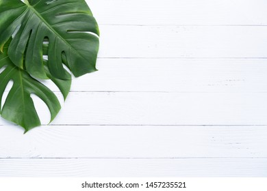 Isolate Dark green Monstera large leaves, philodendron tropical foliage plant growing in wild on white wood background concept for flat lay summer greenery leaf texture rainforest floral
