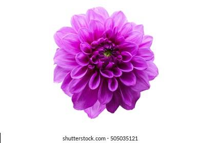 isolate flower
