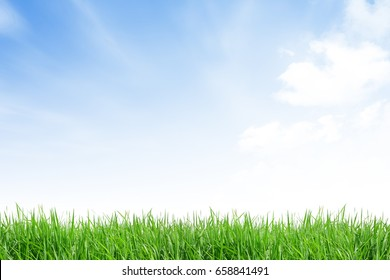 isolate grass field on white background with blue sky and cloud