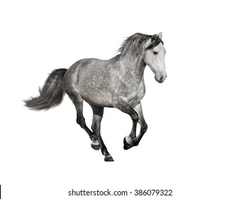isolate of the gray horse galloping on the white background