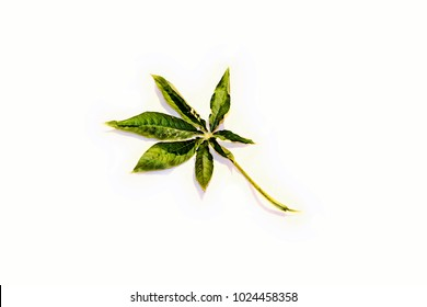 isolate image of fresh young tree leave , white background