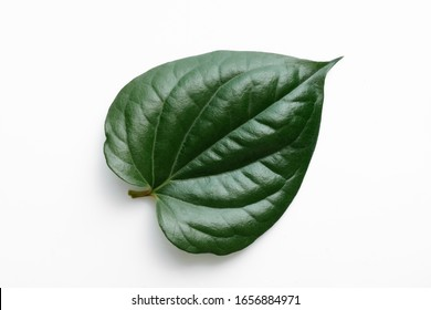 Isolate on white background of the natural leaves Betel texture with young of the plant on sunny day.