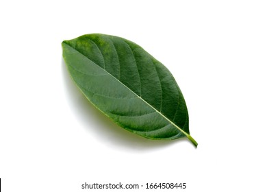 Isolate on white background of the natural leaves texture with young of the plant on sunny day.