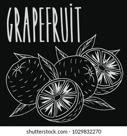 Isolate ripe grapefruit fruit as chalk on blackboard. Close up clipart in chalkboard style. Hand drawn icon. Raster version of illustration