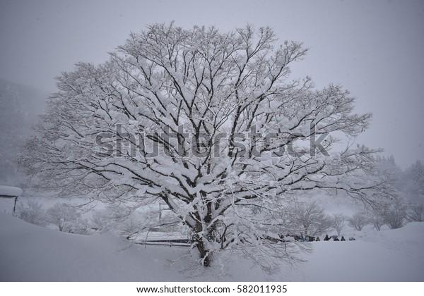 isolate tree on snow background